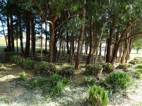 Even the native grasses were cut back.