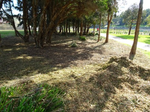 This large area is now mulch