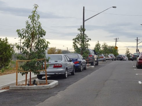 #-metre tall Queensland Brushbox trees planted in in-road tree pits.  Each tree has 5 ag-pipes installed for watering.  These trees will add a wonderful large canopy here, cooling the street, adding beauty & providing for wildlife.