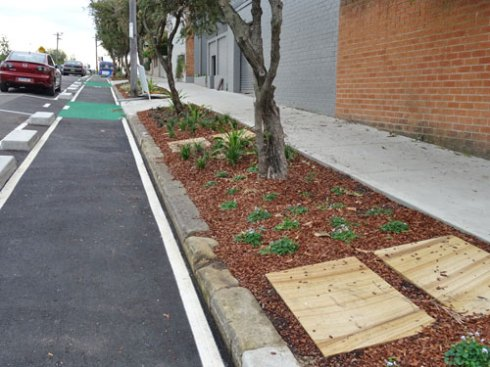 A bicycle lane and a verge garden that is as wide as the concrete footpath runs the full length of this section of Concord Street.  The other side also has a wide contineous garden, plus in-road plantings of Queensland Brushbox trees.