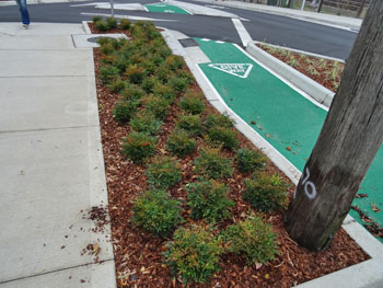 Showing part of a an in-road verge garden with bicycle lane in Concord Street.
