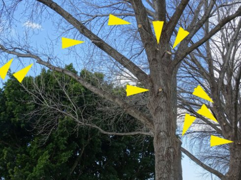 Showing the visible pruning in this photograph on just one tree.