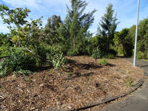 Area of planting on the other side of the path at Tempe Reserve.  This was the 2011 National Tree Day site.