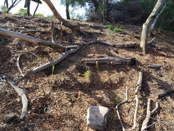 Logs from the felled wattle trees have been used to help prevent erosion in the area behind the kiosk.  Dead logs also provide habitat for flora & fauna, as well as add to the soil as they decay.