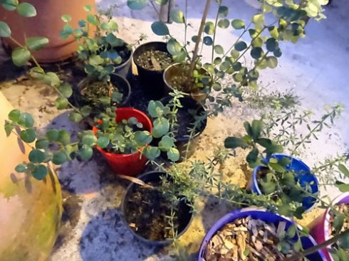 Some of our propagated plants after learning how to propagate in this workshop last year.