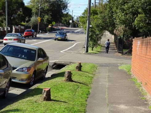 Three stumps in Beauchamp Street Marrickville.  To me it looks like the removal of the trees was not authorised.