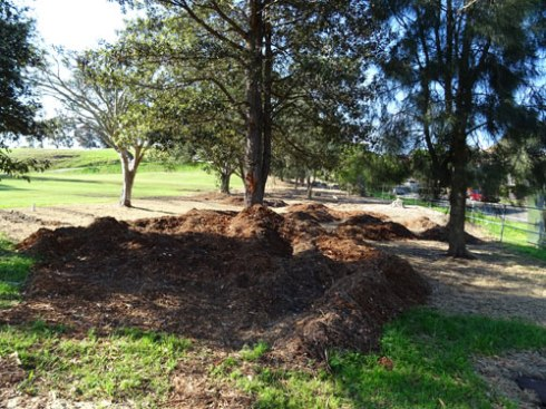 Lots of mulch laid at the bottom of the Beauchamp Street habitat area.