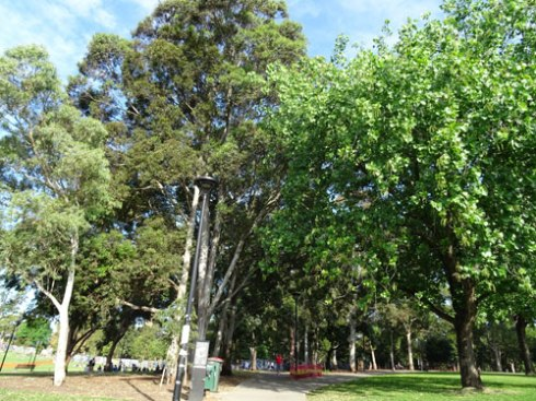 I think this section in Camperdown Memorial Rest Park looks gorgeous.  What is great is that even more trees have been planted in and near this area of trees.