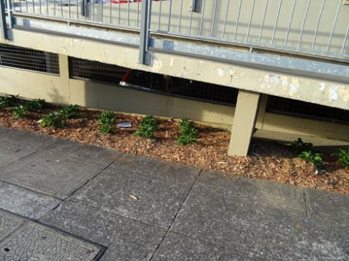 Planting has even happened in the dead zone underneath the ramp.