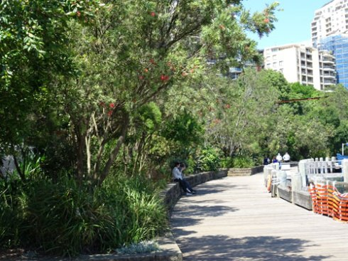 The foreshore walk has a lots of trees and plants alongside making this area very beautiful.
