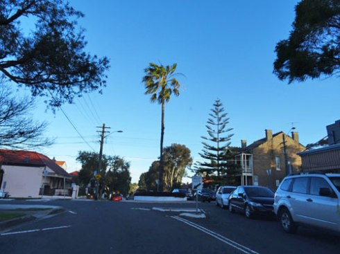 Stanmore Sydney.  Trees can define an area and act as landmarks.  I remember when this palm was planted. It was the early 80s and a number of  people I worked with actually went have a look because it was so unusual for trees to be planted in roundabouts.