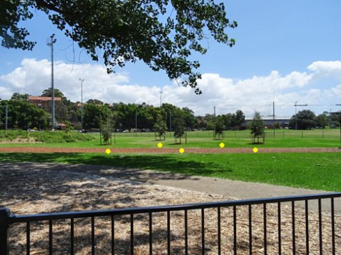 New trees for Steel Park Marrickville South