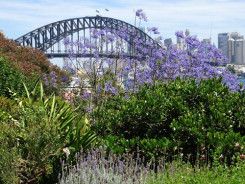 The lavender view at Lavender Bay is absolutely gorgeous.