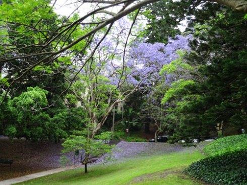 Jacaranda petals festooned all over the lawn was a pretty sight