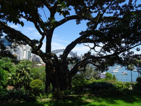 This magnificent fig tree in Clark Park Lavender Bay enhances the view of the Sydney Harbour Bridge.  Very few people want a treeless harbour. Trees have many benefits including adding significant beauty.