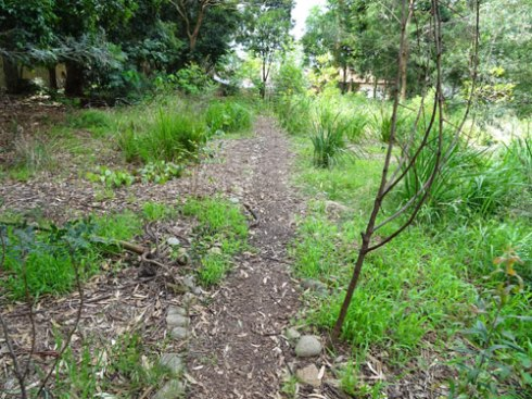 Cadigal Reserve Bushcare site cared for by Year 7 of Ashfield Boys High School.