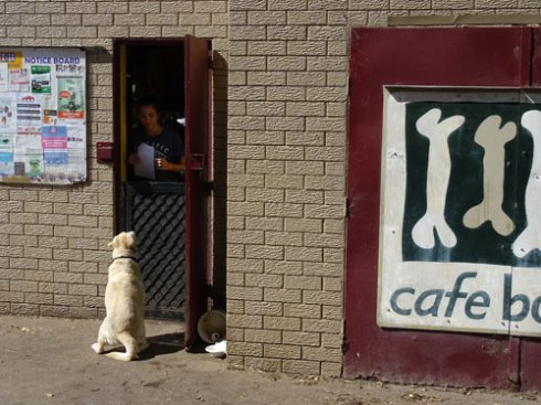 The are very kind to dogs at Cafe Bones.  This is the side entrance where clever dogs wait to see if they get lucky.