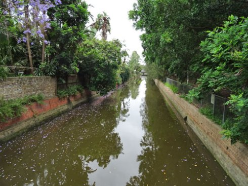 The Hawthorn Canal with floating flowers form a Jacaranda tree