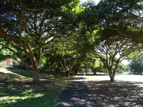 Lots of lovely trees in Hawthorne Canal Reserve