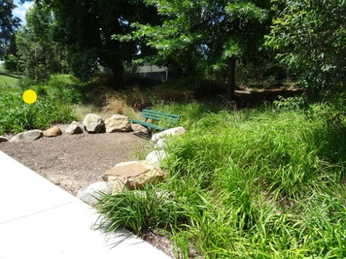 The garden beds were all planted with native grasses.  I think this is looking good.