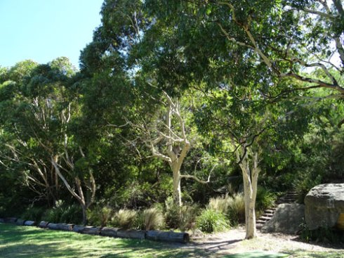 One of two gorgeous thick bush corridors on either side of King George Park