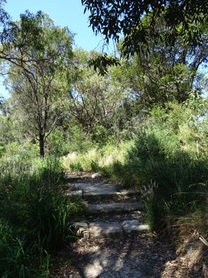 One of a few substantial bush areas in Leichhardt Park