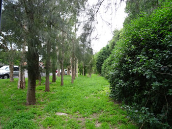 Unexpected and lovely green space at the exit of the tunnel at Lords Road Leichhardt.