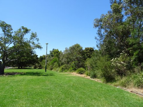 One of the sites of bush re-generation work done by volunteers of Greenway Bushcare.  The Hawthorne Canal is on the left past this  line of bush.