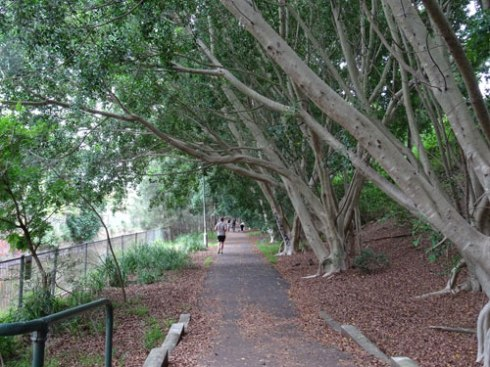 The Greenway at leichhardt. This is a natural peaceful place that was being used by quite a few people while we were there. Thsi is a major asset for both people and wildlife.