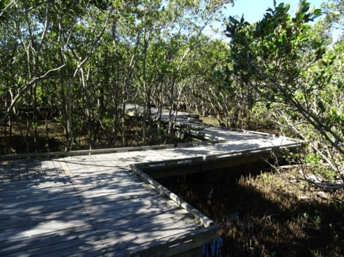 The raised boardwalk through the Badu Mangroves.