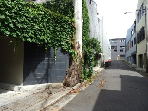 A very detirmined tree to live in this space for as long as it did.  When it is gone the space is perfect for a small garden to keep some beauty in this lane.  Better than weeds.