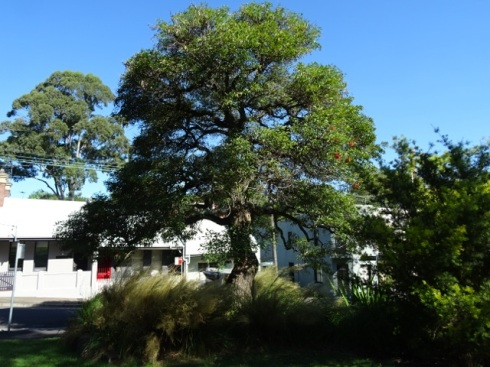 There is an old old Cockspur coral tree at the entrance surrounded by a densely planted garden bed that developed into a bush pocket.