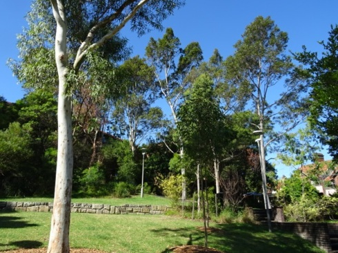The grassed area with newly planted gums sitting near older trees. The shadows these trees left on the grass added another level of interest.
