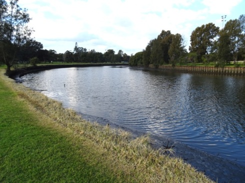 Glyphosate spraying all along the edge of the Cooks River in the Marrickville Golf Course.