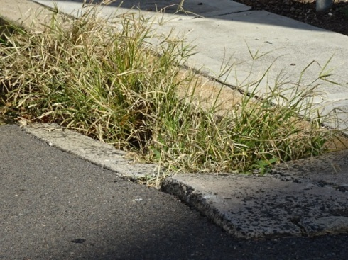 Gutters are full of weeds in some places.