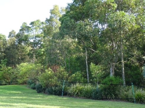 One of the National Tree Day sites in Sydney Park - lovely thick understory lightly fenced off and respected by the community.