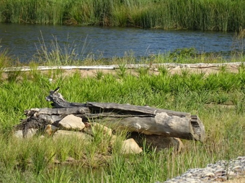 Habitat for wildlife. A wren is perched on this log.