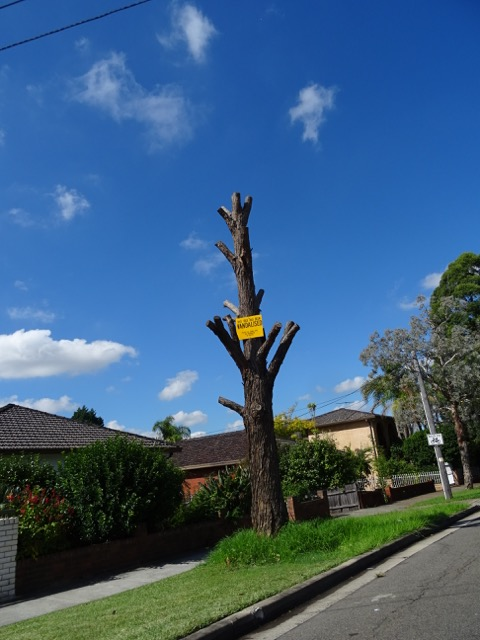 Vandalised tree in Claremont Road Burwood Heights.  I love that the tree has been left in place with a sign saying it has been vandalised.