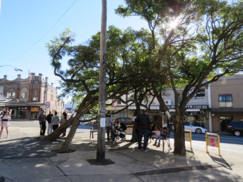 Four Robinia trees to be removed on the corner of Herbert and New Canterbury Road Dulwich Hill. By my observations, this is a popular place for people.