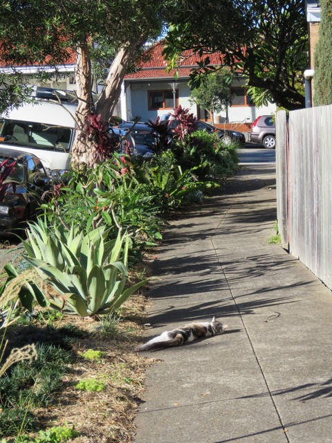 SAVING OUR TREES - Marrickville Municipality