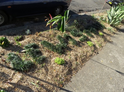 Lewisham written in dwarf mondo grass. This is in the newly planted area.  Lovely.