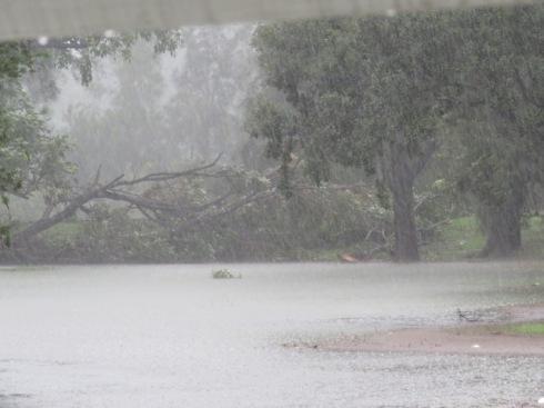 Tree down in Mackey Park