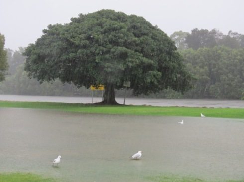 Marrickville Golf Course with the Cooks River visible behind the tree.