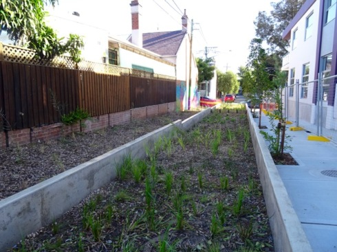 Very large rain garden in  Alice Lane Newtown