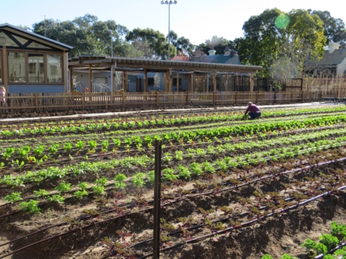 Another view of the vegetable plot.
