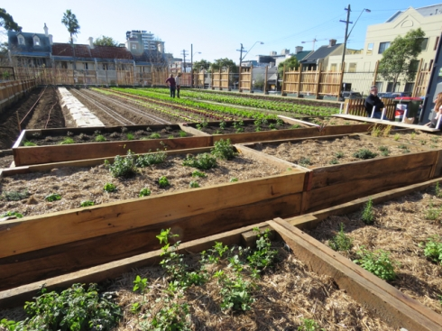An organic pocket farm has sprung up in the inner city suburb of Camperdown.