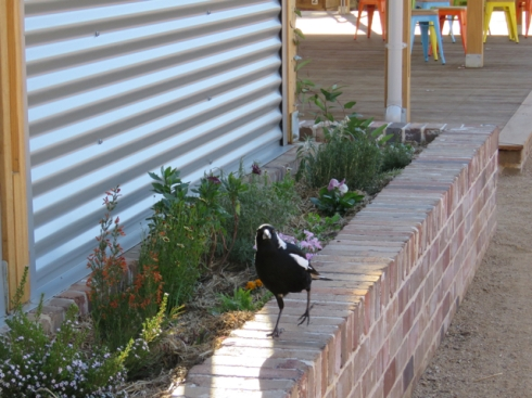 They have a resident Magpie who seems very happy.