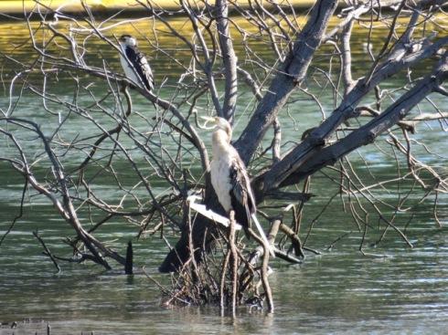 Fatima Island Cooks River Tempe