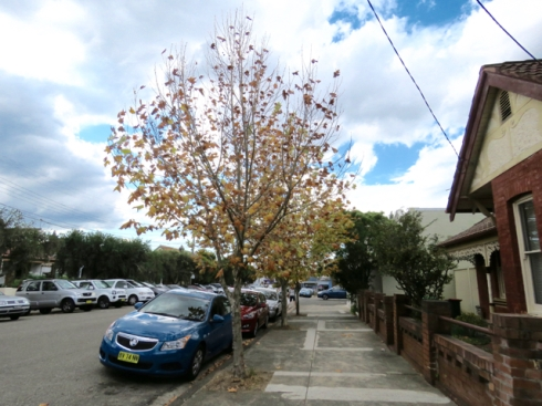 Marrickville streetscape that will one day be leafy when the Plane trees grow.
