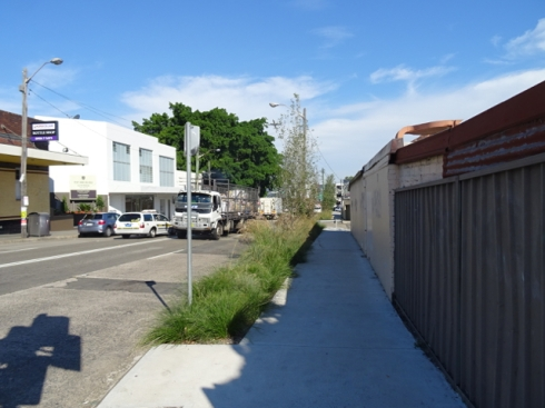 It is great that Marrickville Council depaved and created verge gardens along this stretch in Sydenham, plus added some Poplar trees.  Before it was just hard concrete.